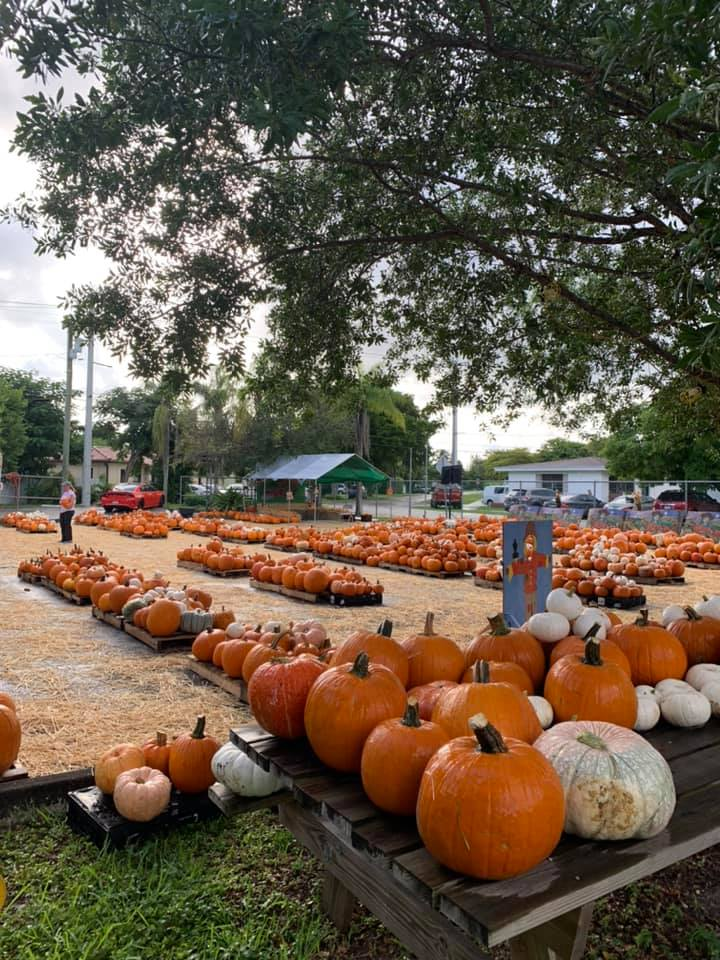 Pumpkin Patch at Poinciana United Methodist Church (Photo courtesy Mandy Weeks via Miami Springs FB Community Group)