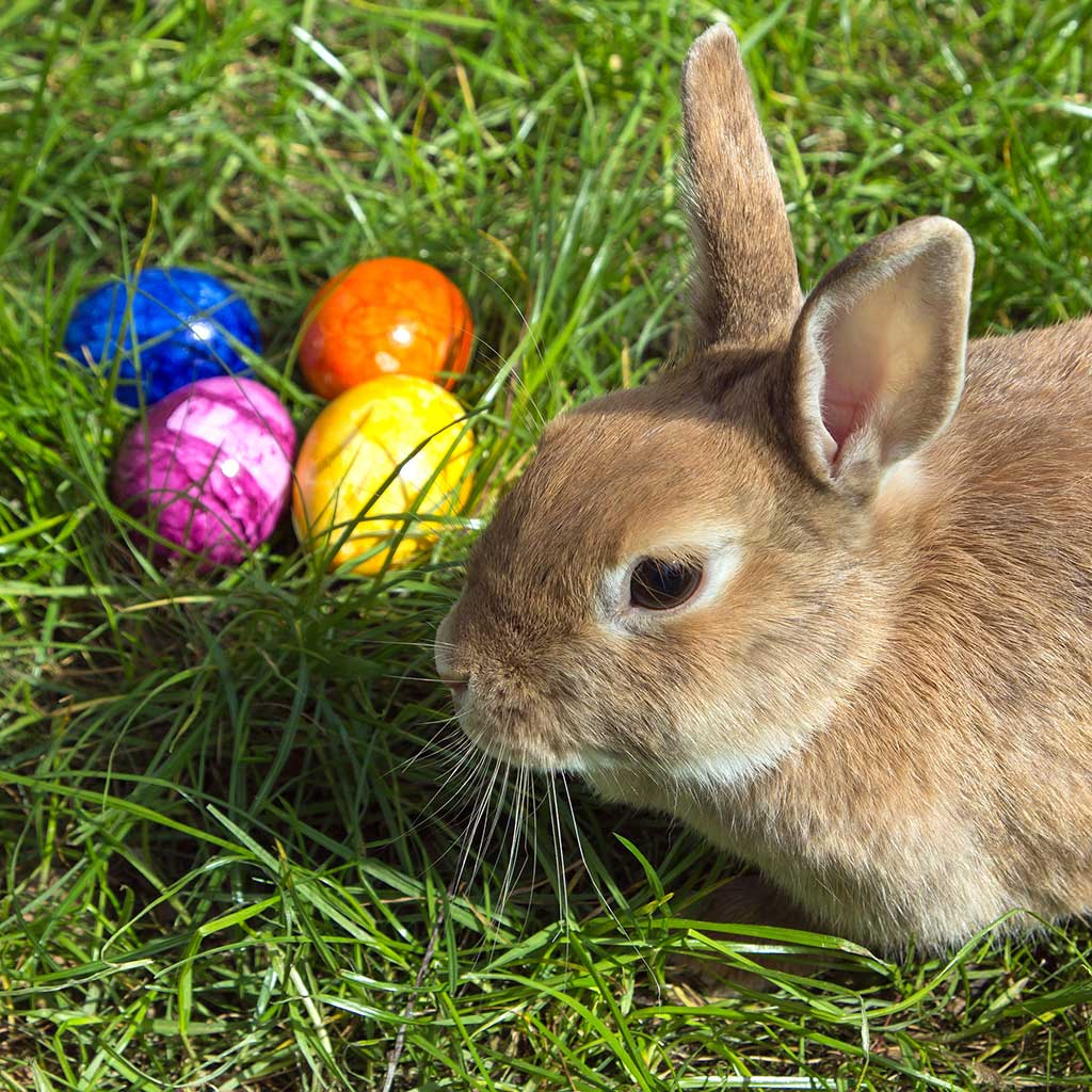 Easter Bunny visits Miami Springs