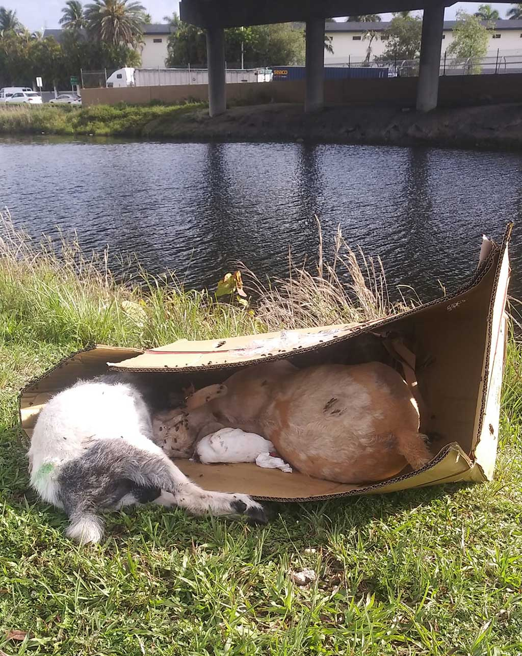 Photo of dead animals posted by Ralph Nuñez via the Miami Springs Community Facebook Group