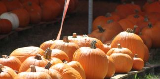 Miami Springs Pumpkin Patch and Harvest Festival