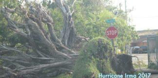 Hurricane Irma Miami Springs