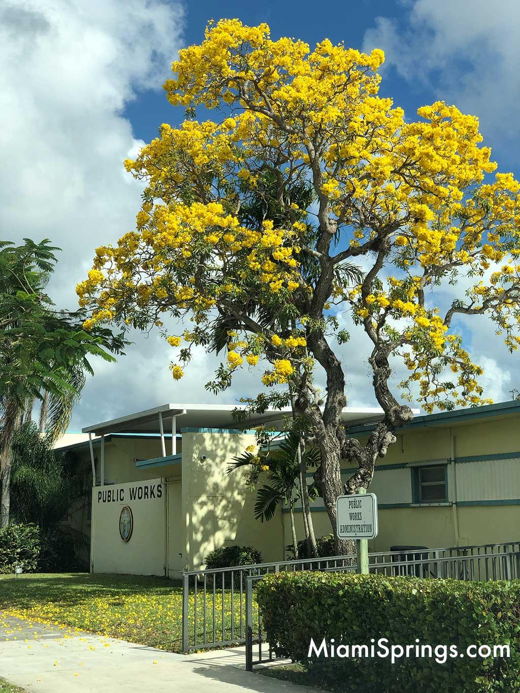 Spring Flowers in Miami Springs