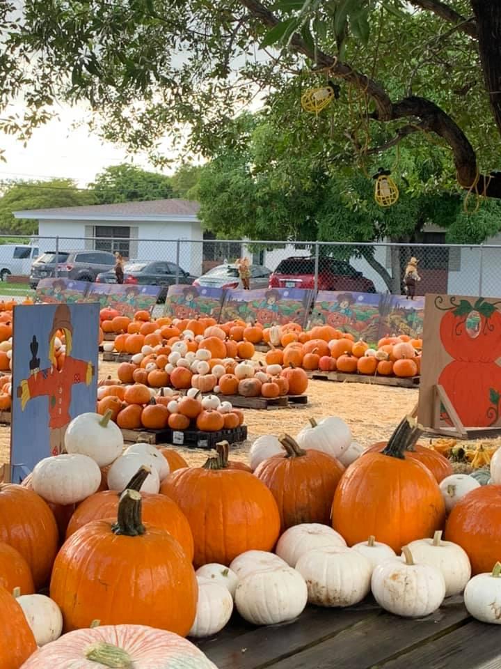 Pumpkin Patch at Poinciana United Methodist Church (Photo courtesy Mandy Weeks via Miami Springs FB Community Group)