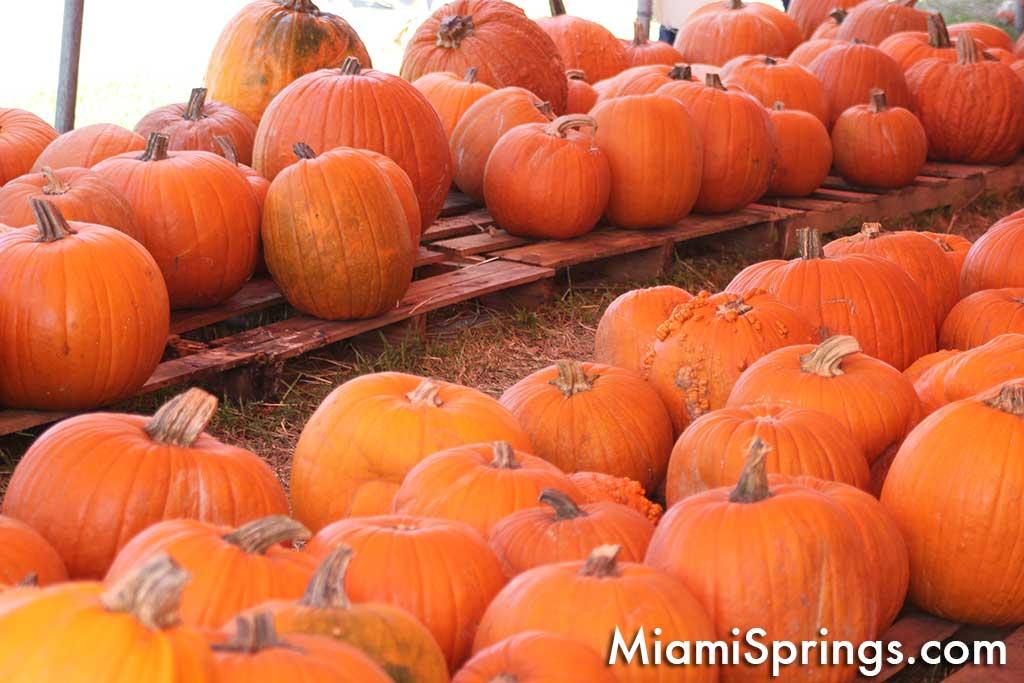 Pumpkin Patch Harvest Festival